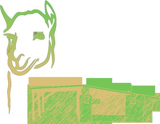 Alpakahof Brandenburg